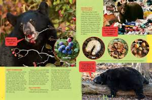 blackbears diet and food supple picture 3