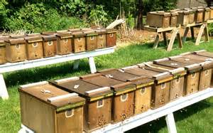 package bees for sale michigan picture 2