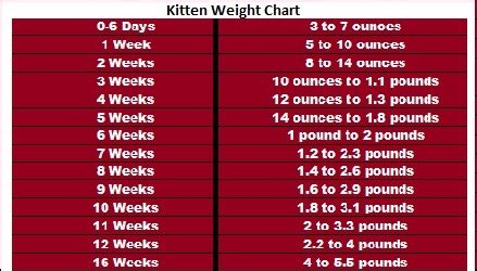 cat food and weight gain picture 3
