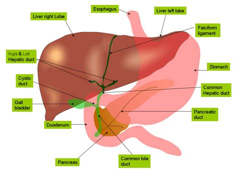 weight loss and gallbladder disease picture 17