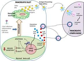 weight loss beta cell regeneration picture 1
