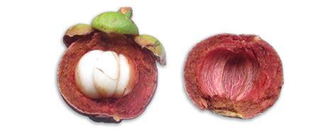 garcinia mangostana philippines picture 7