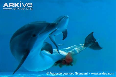 an ordinary dolphin's diet picture 1