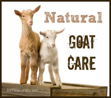 goats prefer probiotic power picture 9