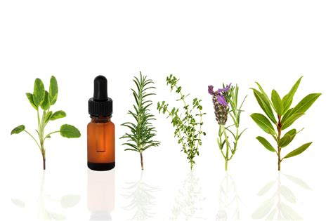 herbal oil picture 10