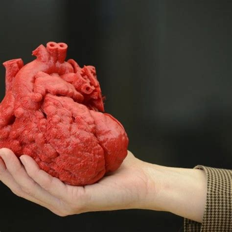 human liver how it works picture 11