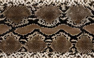 snake skin s picture 2