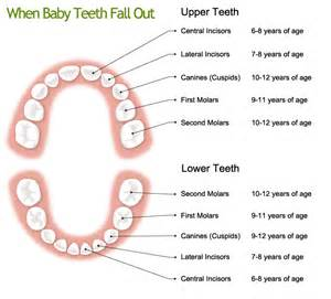 ages children loose baby teeth picture 11