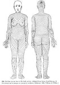 skin line picture 3