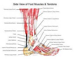 intrinsic muscle disease of the foot and ankle picture 19