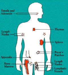 autoimmune thyroiditis armpit lymph nodes picture 7