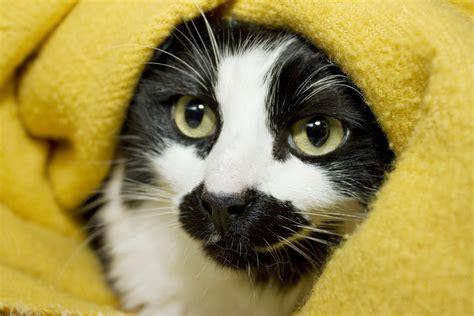 cat liver disease picture 13