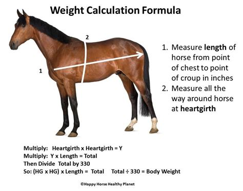 feeding hay to horses weight gain picture 10