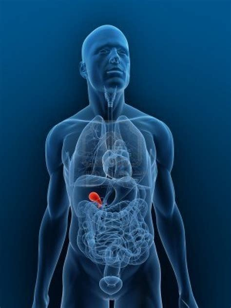 abnormal liver function test picture 18
