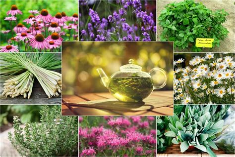 can you get caught using herbal clean on picture 3