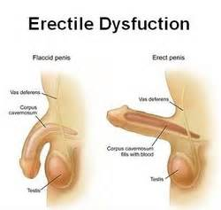 blood flow for erections picture 3