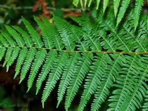 herbal medacine picture 10