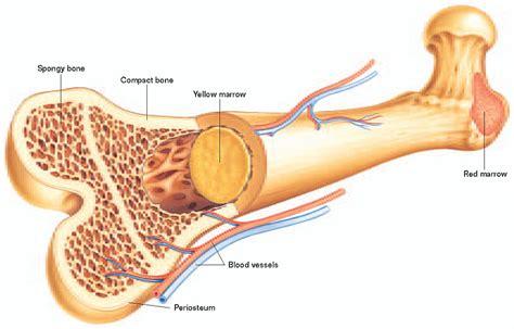 bone marrow suppression picture 1