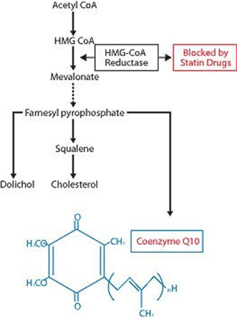 coq10 deficiency/statin drug picture 5