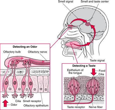 natural ways to flush receptors of the brain picture 7