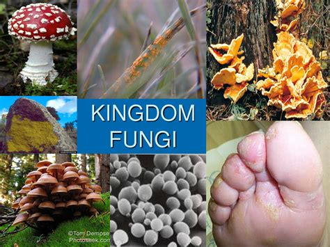 what do fungi eat picture 14