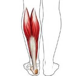 injury to calf muscle picture 19