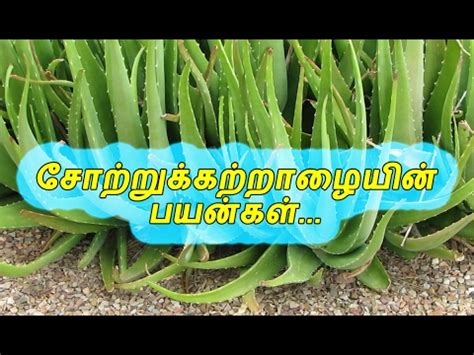 white hair treatment for paaty vythiyam in tamil picture 13
