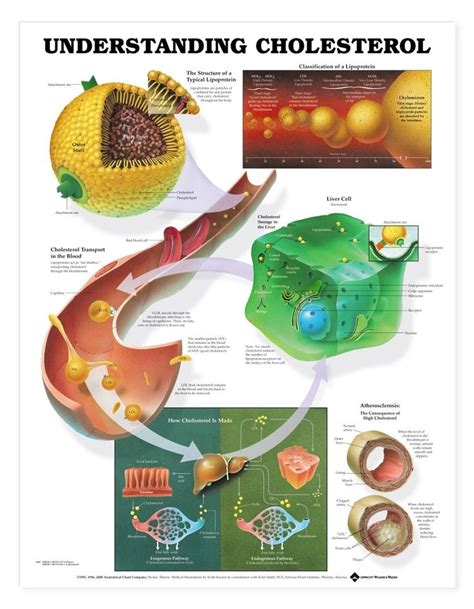 What food affects cholesterol picture 18