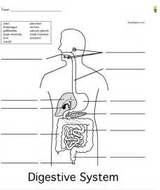 intestinal tract sounds test picture 3