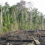 Environmental issues in Brazil