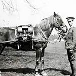 Horses in World War I