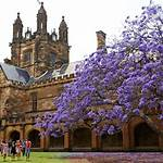 Jacaranda, University of Sydney