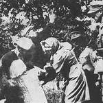 Kidnapping of children by Nazi Germany