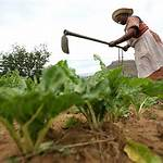 Land reforms by country
