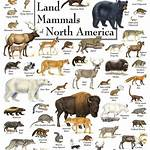 List of mammals of North America