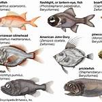 List of marine spiny-finned fishes of South Africa