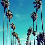 Palms, Los Angeles