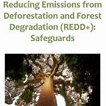 Reducing emissions from deforestation and forest degradation