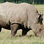 Rhinosaur