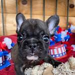 Standard French