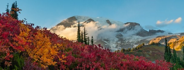Trees on a hill, Mt. Rainier National Park Washington - Kelly  vanDellenSubject Matter for 2/June/2021