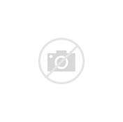 Image result for pottery plaster #1 50lb bag