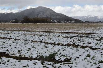 近江百山 荒神山 に対する画像結果