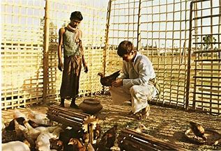 Image result for images peace corps volunteers 60s raising chickens