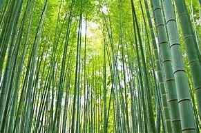 竹 に対する画像結果