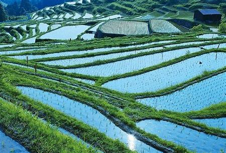 Image result for japanese rice paddie fields