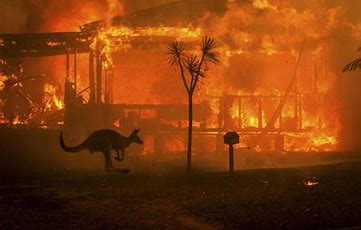Image result for apocalyptic fires in australia
