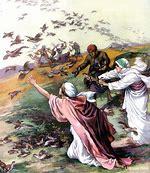 Image result for quail in exodus pics