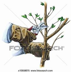 Image result for royalty free clipart of pruning