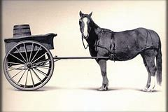 Image result for cart before the horse pics